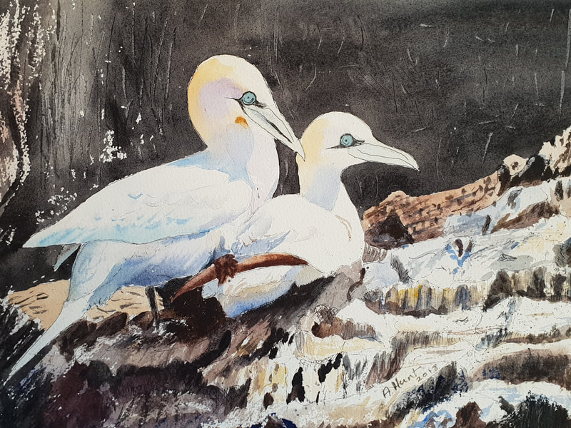 Two gannets on the Bass Rock